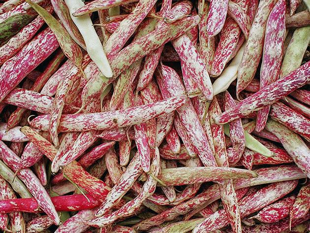 beans6a.jpg